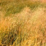 quai field 3